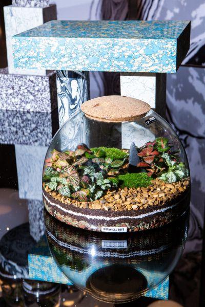 Eden Dome Terrarium Kit