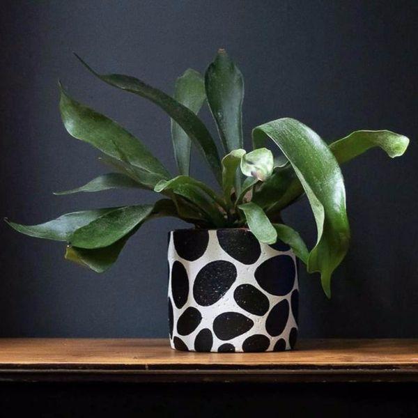 BOBBLE PLANT POT - BY HANNAH DRAKEFORD DESIGN planter HANNAH DRAKEFORD DESIGN