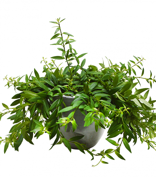 ceramic plant pot light grey home delivery london