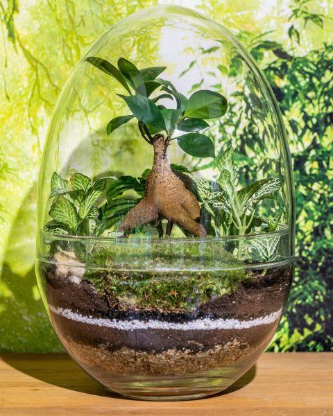 Large glass egg terrarium kit - 28cm