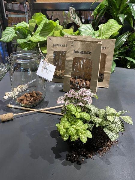 Terrarium Kit ingredients - small no glass