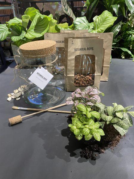 Terrarium Kit ingredients - Large- No glass