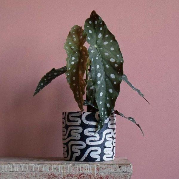 NOODLE PLANT POT - BY HANNAH DRAKEFORD DESIGN planter HANNAH DRAKEFORD DESIGN