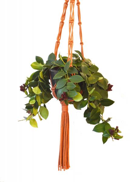 Sustainable cotton macramé plant hanger - Terracotta